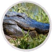 Alligator Smiling Round Beach Towel