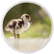 All Alone - Egyptean Gosling And A Tree Round Beach Towel