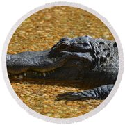 Alligator Round Beach Towel by DejaVu Designs
