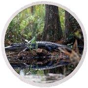 Alligator In Okefenokee Swamp Round Beach Towel by William H. Mullins