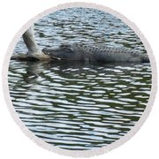 Round Beach Towel featuring the photograph Alligator Resting On A Log by Ron Davidson
