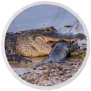 Alligator With A Fish Round Beach Towel