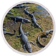 Alligators Along The Anhinga Trail Round Beach Towel