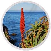 Aloe Arborescens Flowering At Pacific Grove Round Beach Towel by Susan Wiedmann