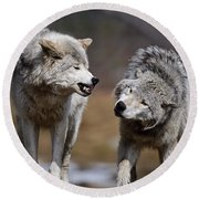 Round Beach Towel featuring the photograph Alpha Displeasure by Wolves Only