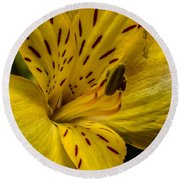 Alstroemeria Bloom Round Beach Towel