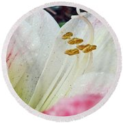 Round Beach Towel featuring the photograph Amaryllis Belladonna by Judy Hall-Folde