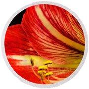 Amaryllis Pollen Round Beach Towel
