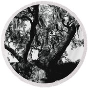Amazing Oak Tree Round Beach Towel