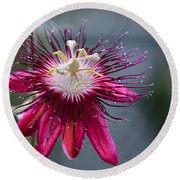 Amazing Passion Flower Round Beach Towel
