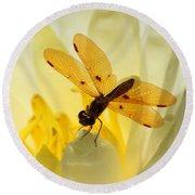 Amber Dragonfly Dancer Round Beach Towel