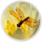 Amber Dragonfly Dancer Round Beach Towel