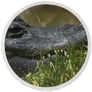 Round Beach Towel featuring the photograph American Alligator Closeup by David Millenheft