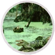 American Alligator Round Beach Towel by Gregory G. Dimijian, M.D.