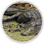 American Alligator Smile Round Beach Towel