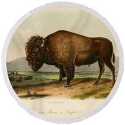 American Bison  Round Beach Towel by Celestial Images
