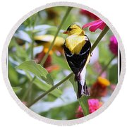 American Goldfinch Round Beach Towel