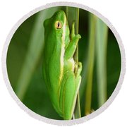 American Green Tree Frog Round Beach Towel