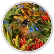 American Robin Round Beach Towel by James Peterson