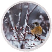 Round Beach Towel featuring the photograph American Robin by Michael Chatt
