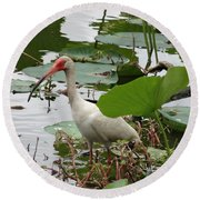 American White Ibis In Brazos Bend Round Beach Towel