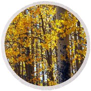 Among The Aspen Trees In Fall Round Beach Towel