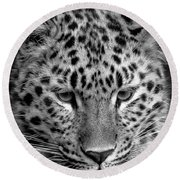 Amur Leopard In Black And White Round Beach Towel