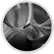 An Ant's Life Round Beach Towel