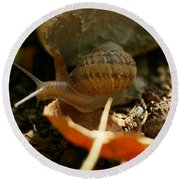 An Awesomely Slow Snail Round Beach Towel