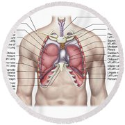 Anatomy Of Human Lungs In Situ Round Beach Towel