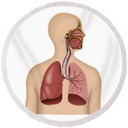 Anatomy Of Human Respiratory System Round Beach Towel