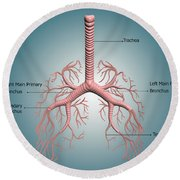 Anatomy Of The Bronchus And Bronchial Round Beach Towel