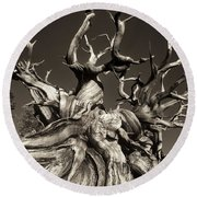 Round Beach Towel featuring the photograph Ancient Bristlecone Pine In Black And White by Dave Welling