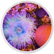 Anemone And Friends Round Beach Towel