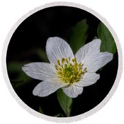Round Beach Towel featuring the photograph Anemone Nemorosa  By Leif Sohlman by Leif Sohlman