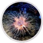 Round Beach Towel featuring the photograph Anemone Sea Life Sea Ocean Water Underwater by Paul Fearn
