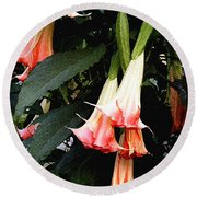 Round Beach Towel featuring the photograph Pink Angel Trumpets  by James C Thomas