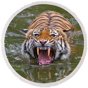 Angry Tiger Round Beach Towel