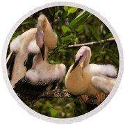 Anhinga Chicks Round Beach Towel by Ron Sanford