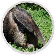 Anteater Round Beach Towel by DejaVu Designs