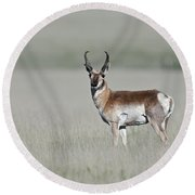 Antelope Buck Round Beach Towel