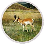 Round Beach Towel featuring the photograph Antelope by Judy Hall-Folde