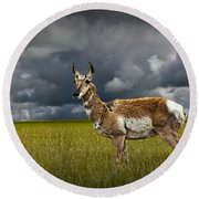 Antelope On The Prairie Round Beach Towel