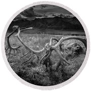 Antlers In Black And White Round Beach Towel