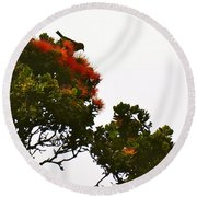 Apapane Atop An Orange Ohia Lehua Tree  Round Beach Towel