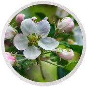 Apple Blossom And Buds Round Beach Towel