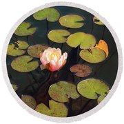 Aquatic Garden With Water Lily Round Beach Towel