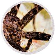 Arachnophobia Round Beach Towel by Bob Orsillo