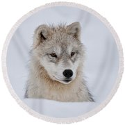 Arctic Pup In Snow Round Beach Towel