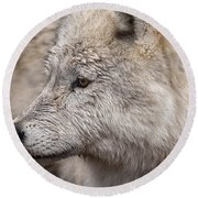 Arctic Wolf Round Beach Towel by Eunice Gibb